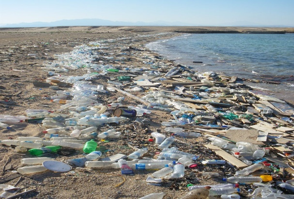 Polluted Beach on the Res Sea in Sharm el Nage, Egypt, Vberger,.jpg
